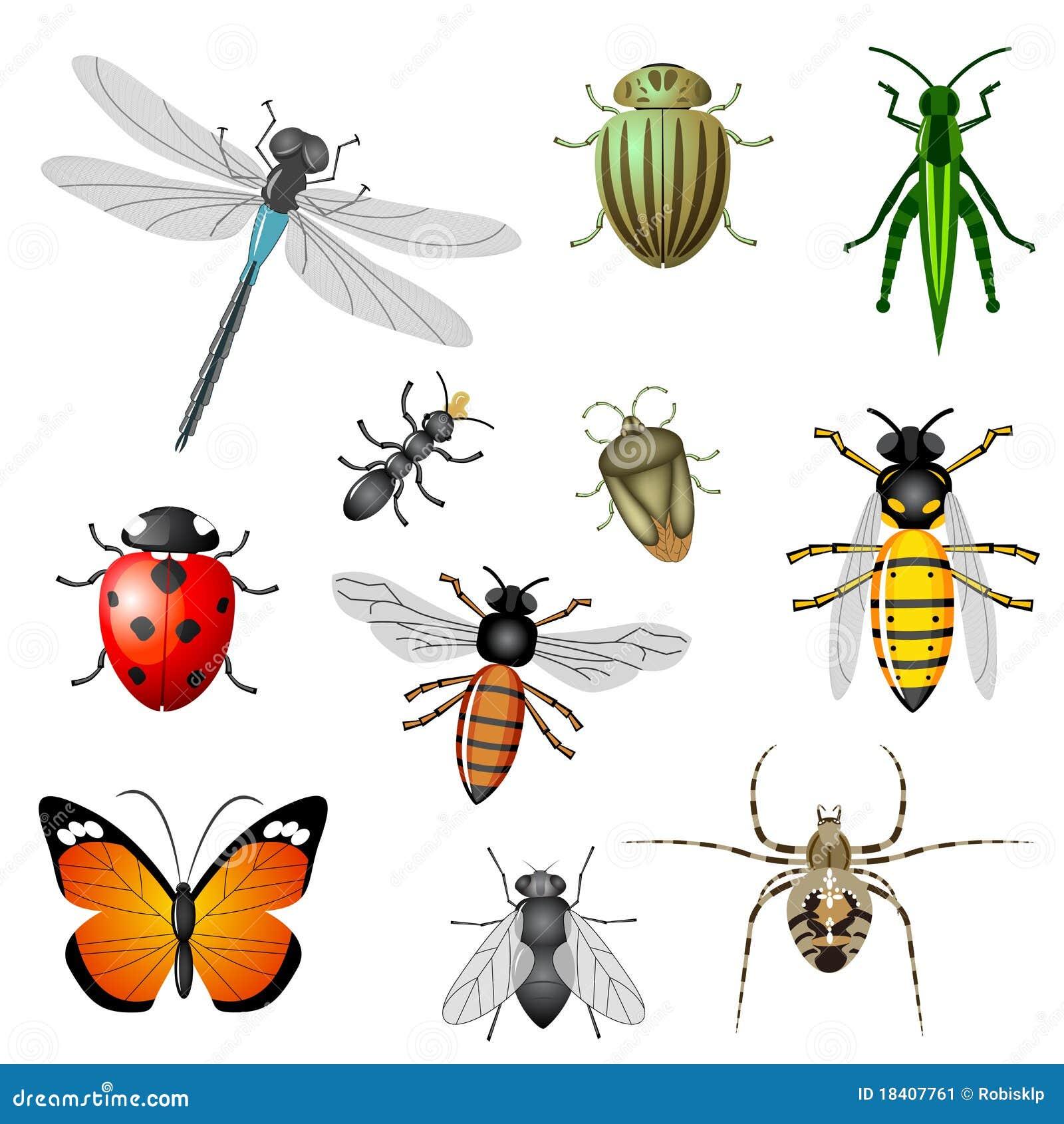 Insectos y fallos de funcionamiento