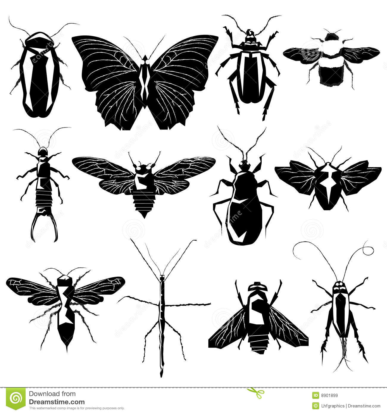 Insects And Bugs In Ve...