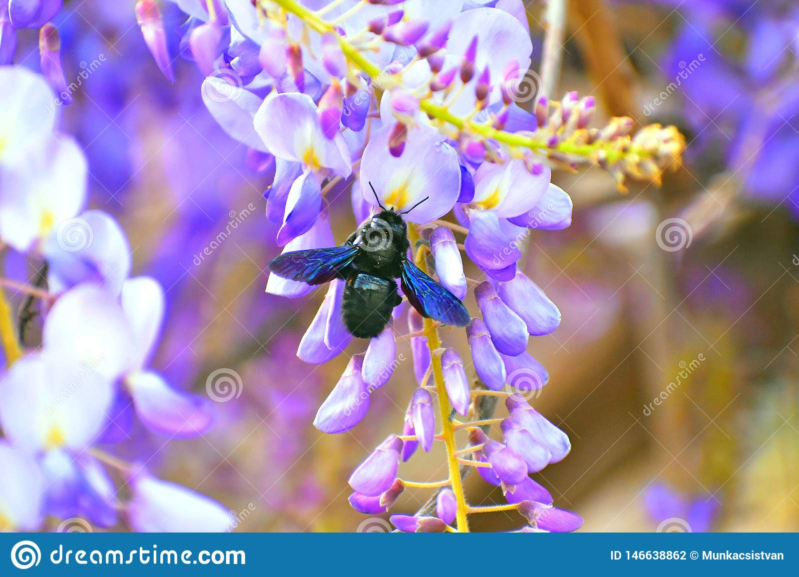 Insects Bumble-bees collect nectar from the flowers.