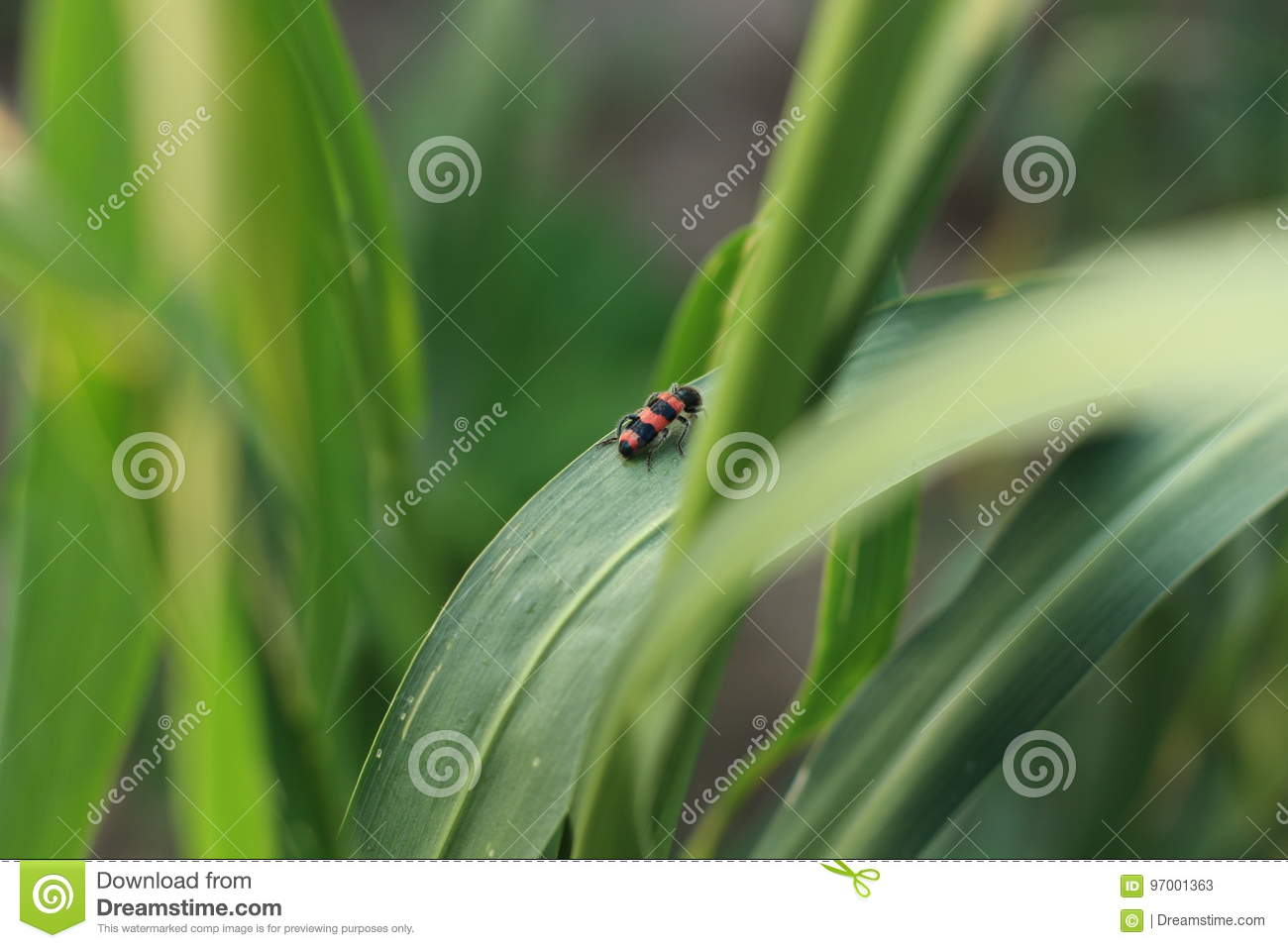 Insects and crops