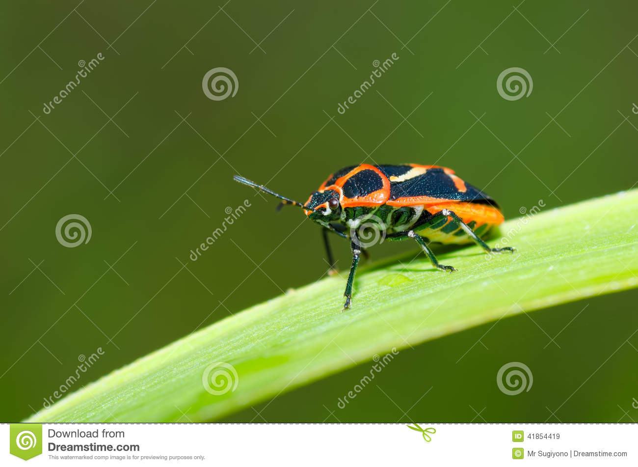 Insects on the grass
