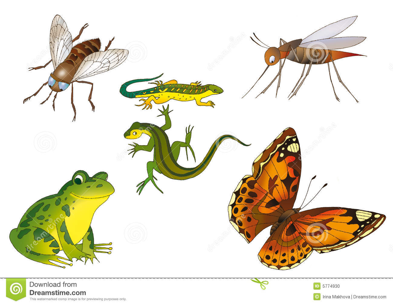 insects and reptiles stock photo   image 5774930