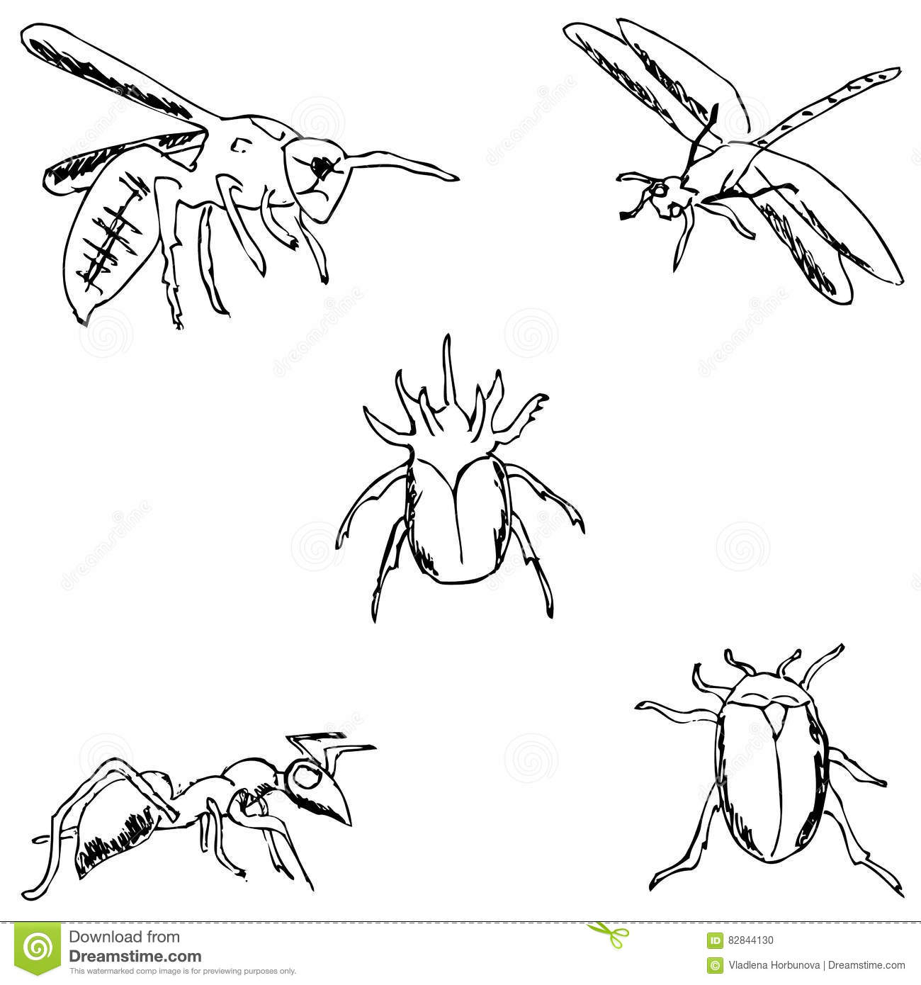 Insects a sketch by hand pencil drawing stock vector