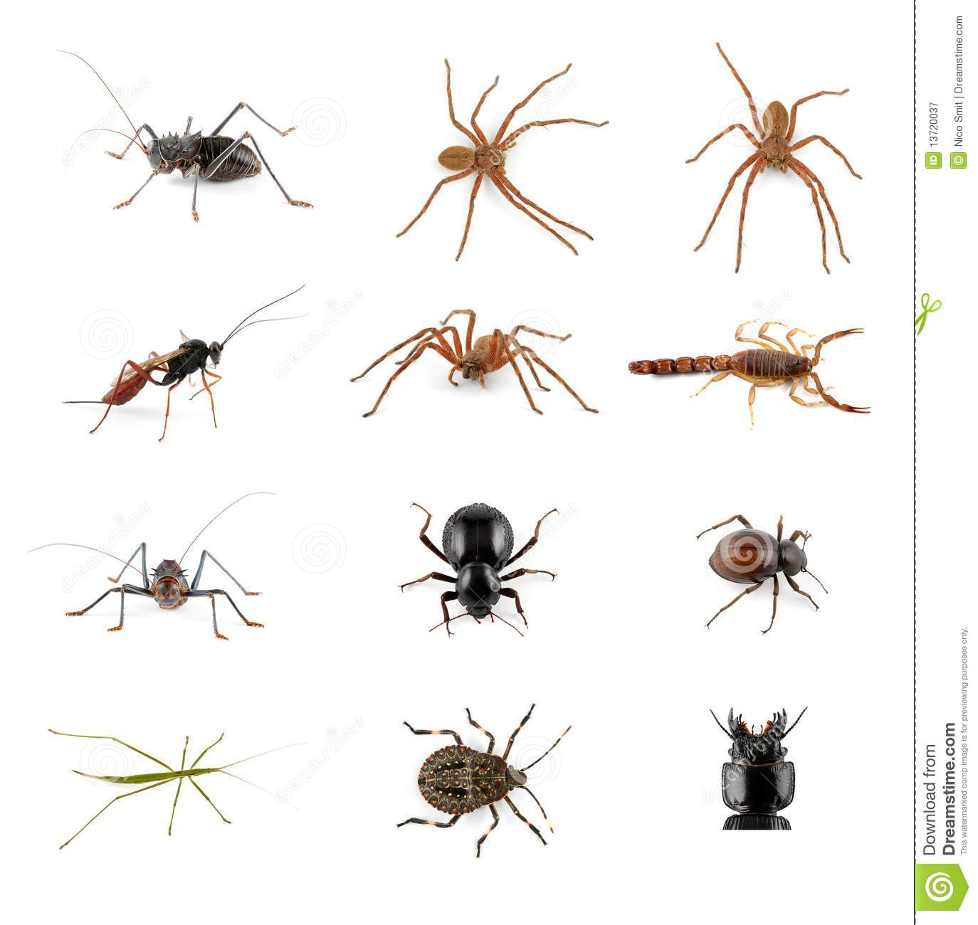 Insects, spiders and scorpion