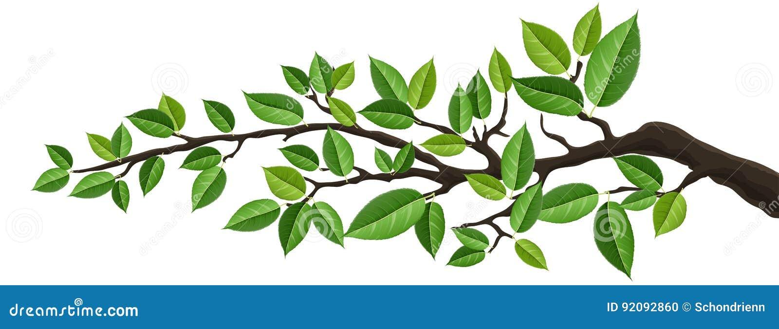 Insegna orizzontale con il ramo di albero isolato con le foglie verdi