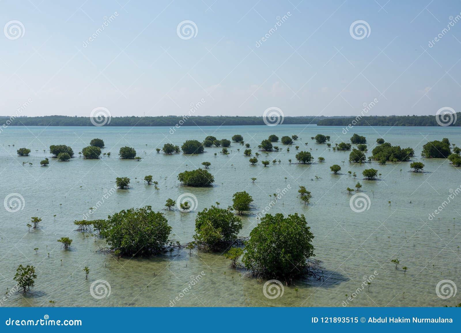 Inseguimento della mangrovia Karimun Jawa