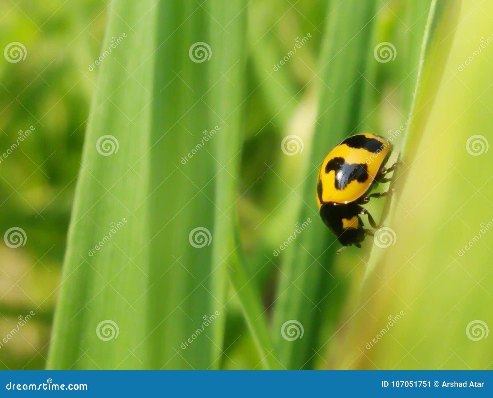 Insekt, dziki, przyroda, zieleń