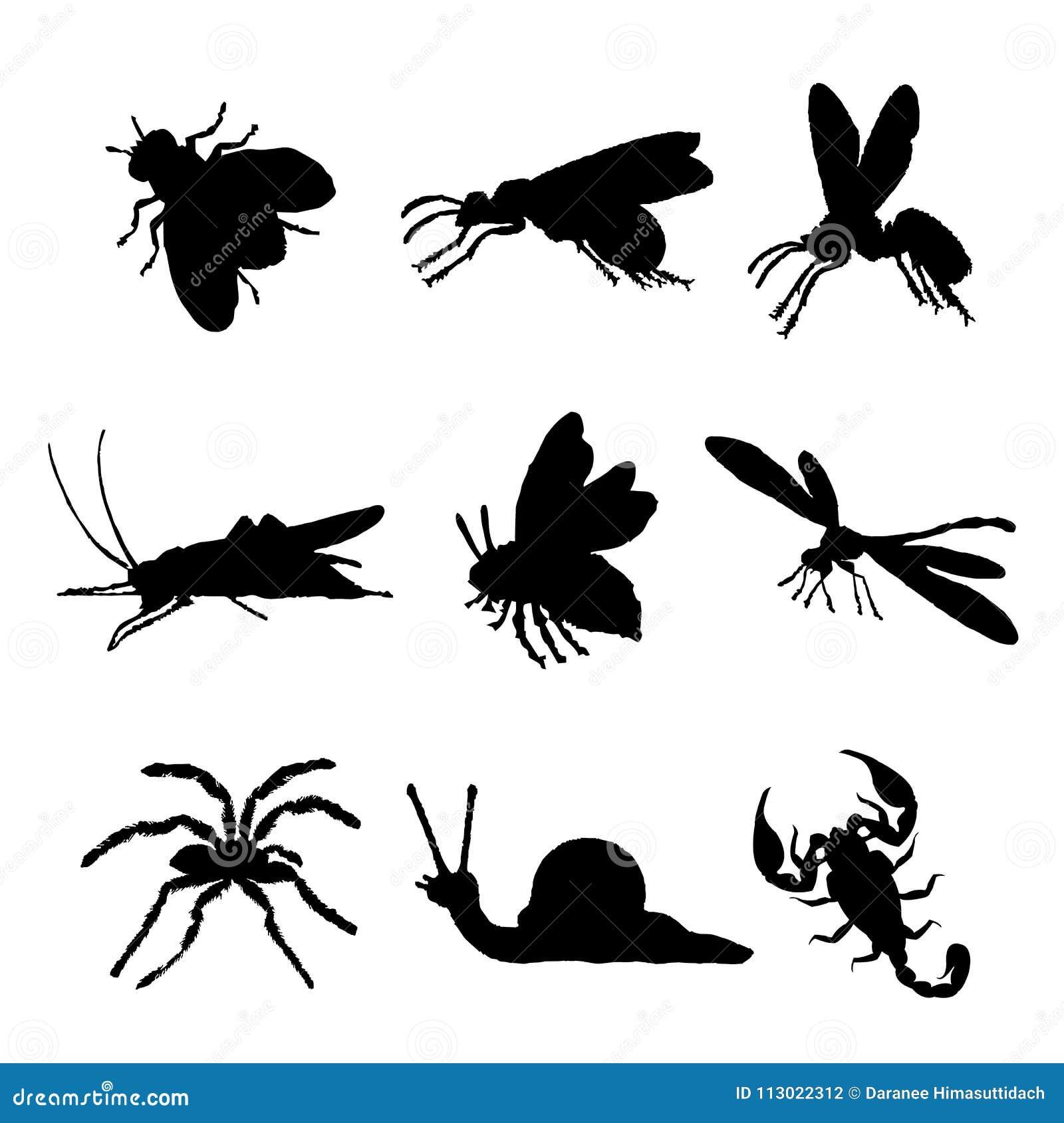 Insekt ikony mieszkania sylwetki pluskwy Zwierzęcej Odosobnionej Czarnej mrówki pająka Motyli wektor