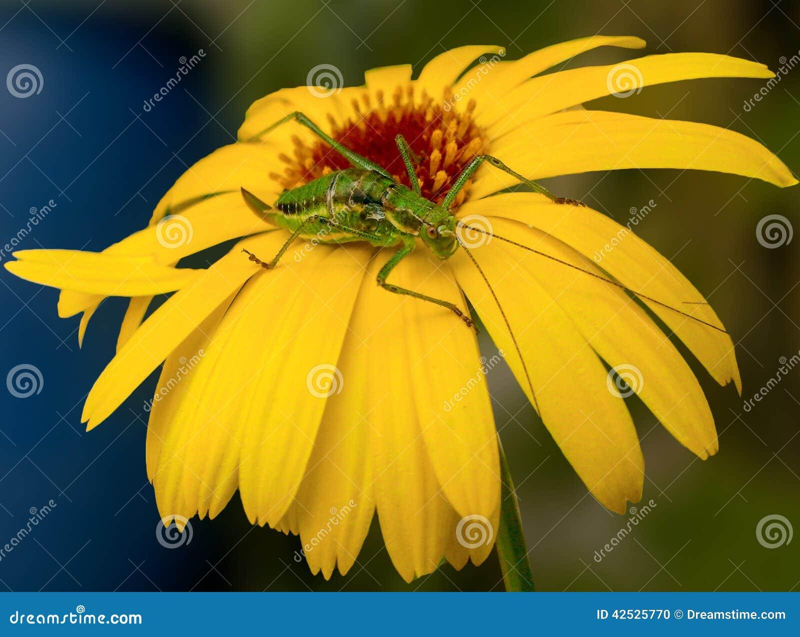Insekt na kwiacie