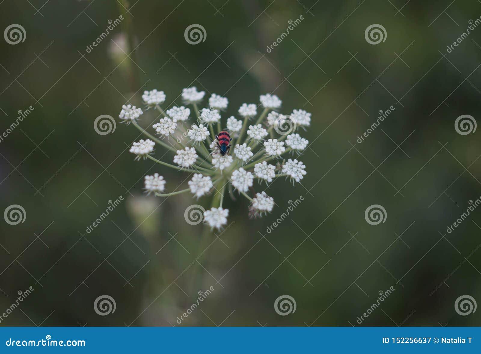 Insekt na kwiacie w postaci serca,