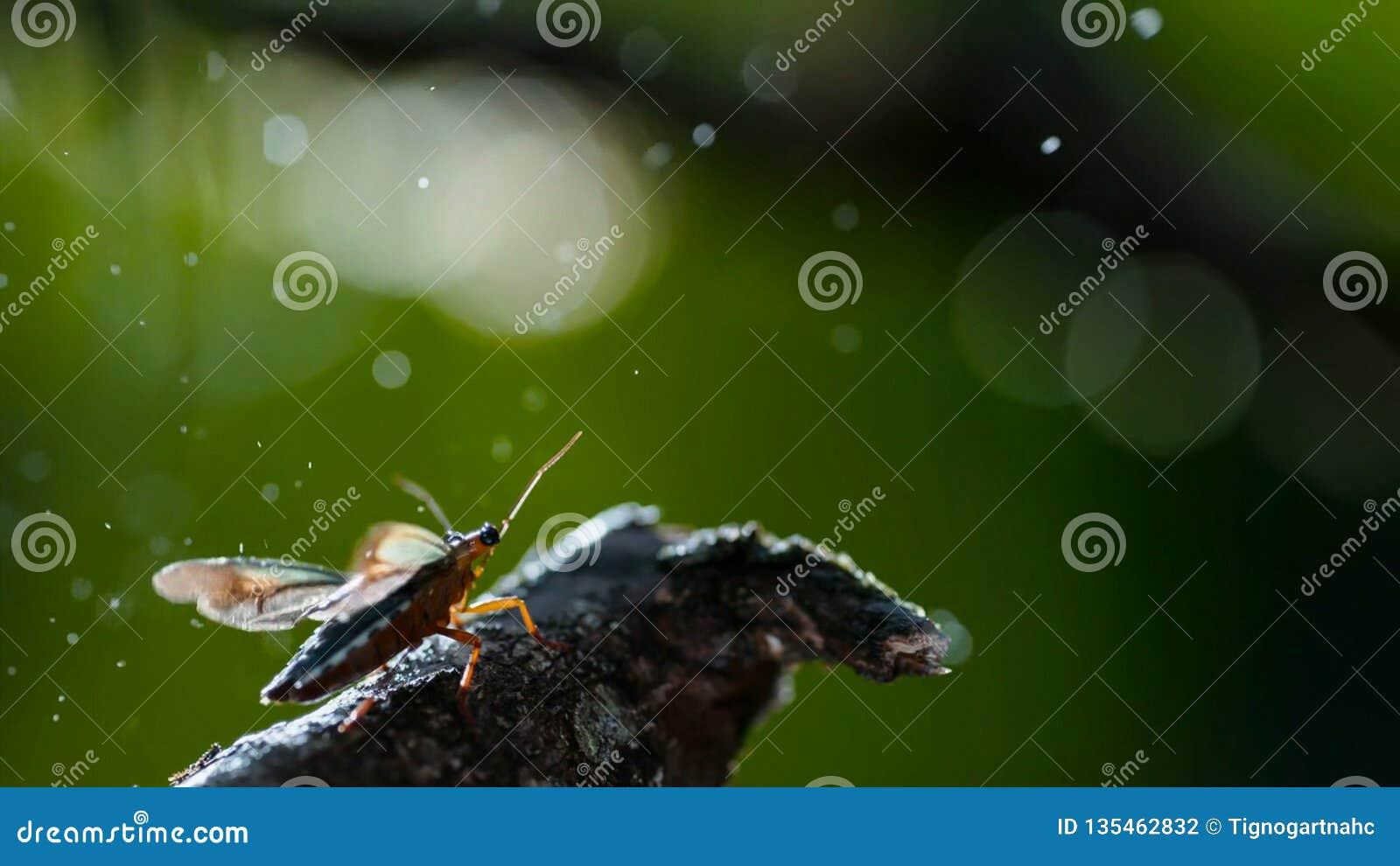 Insekt unter dem Regen, Makroschuß