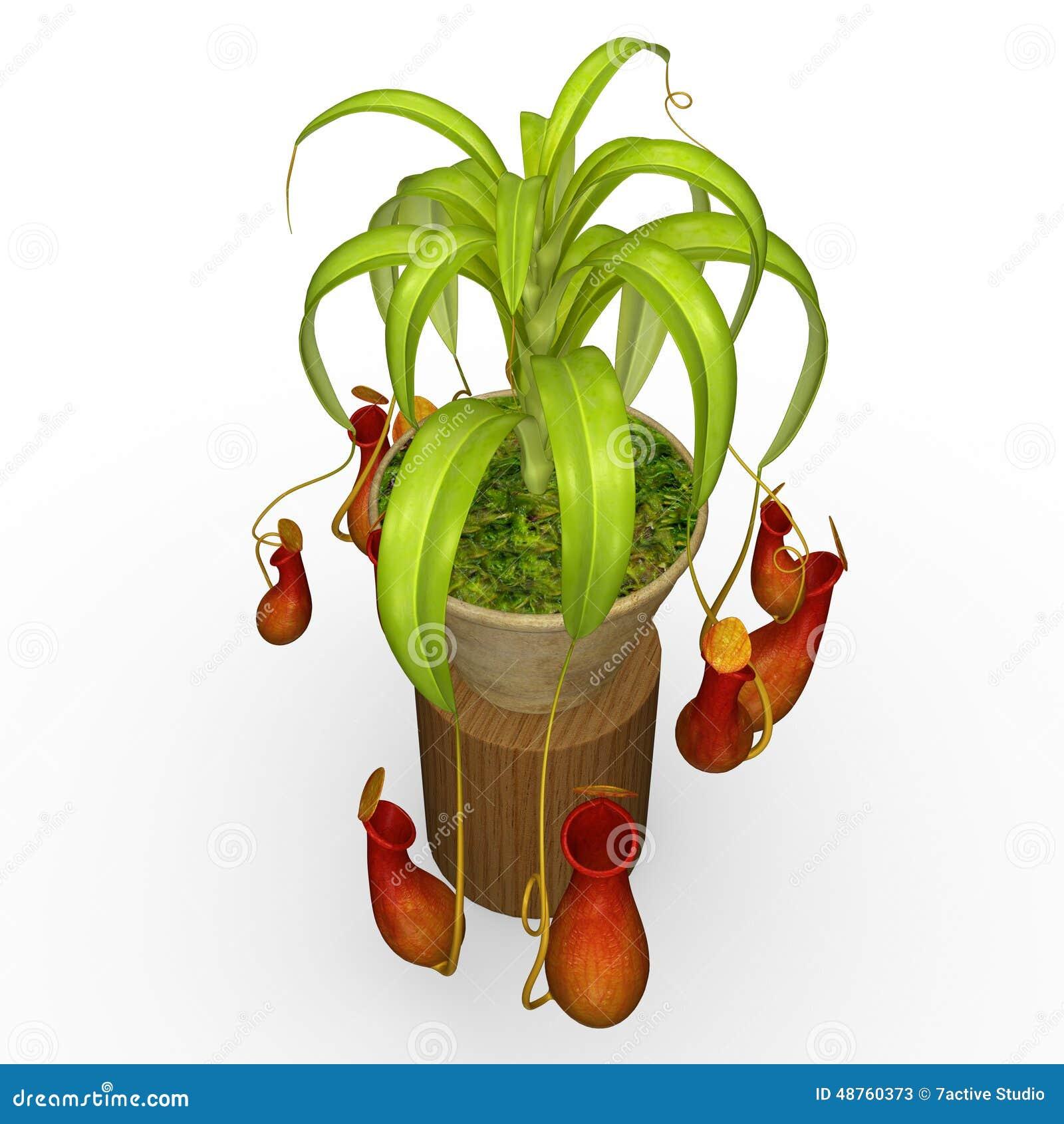 Insektsätande växter