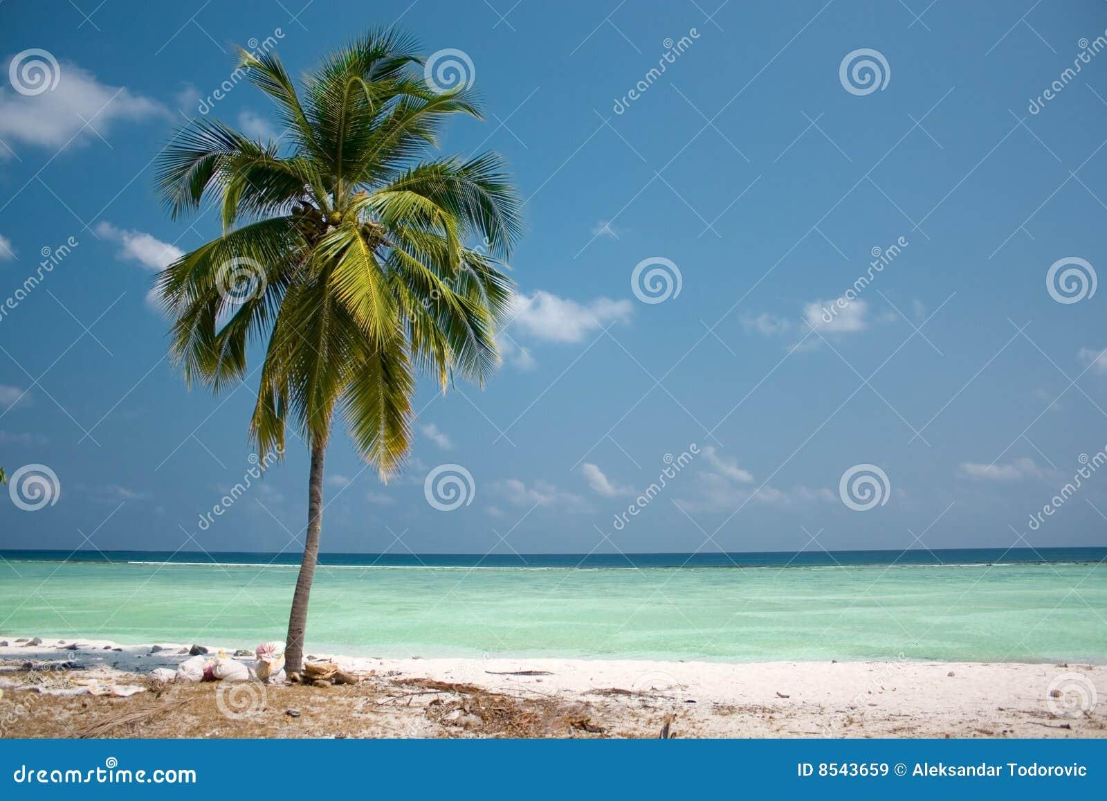 insel paradies palme stockbild bild von hei hintergrund 8543659. Black Bedroom Furniture Sets. Home Design Ideas