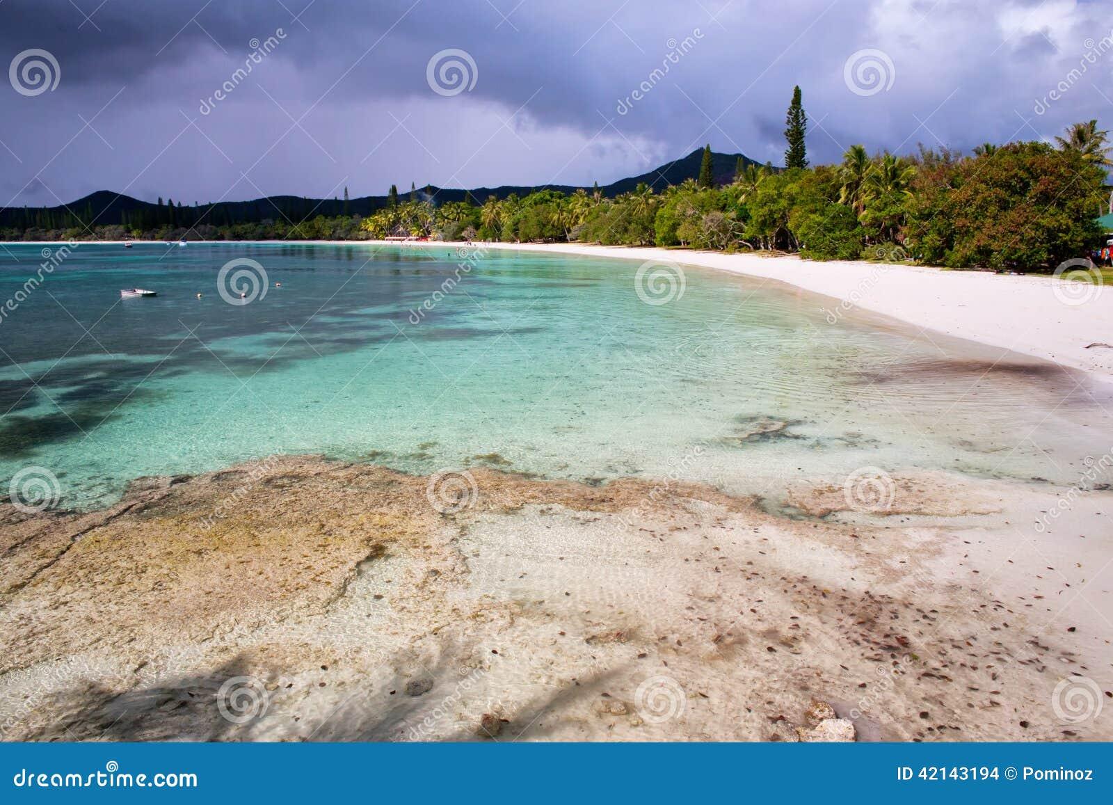 Insel von Kiefern