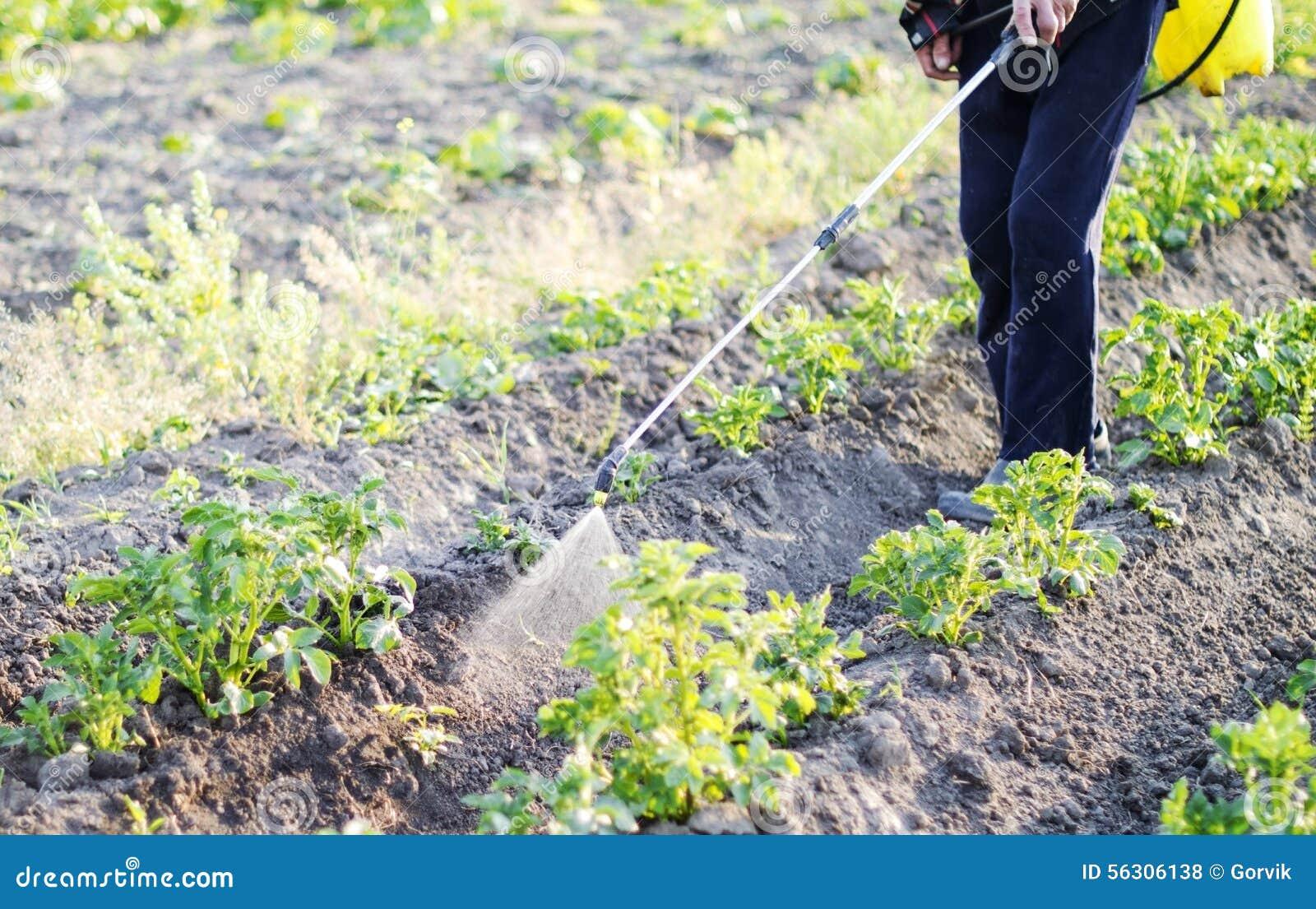 Inseticida de pulverização das folhas das batatas