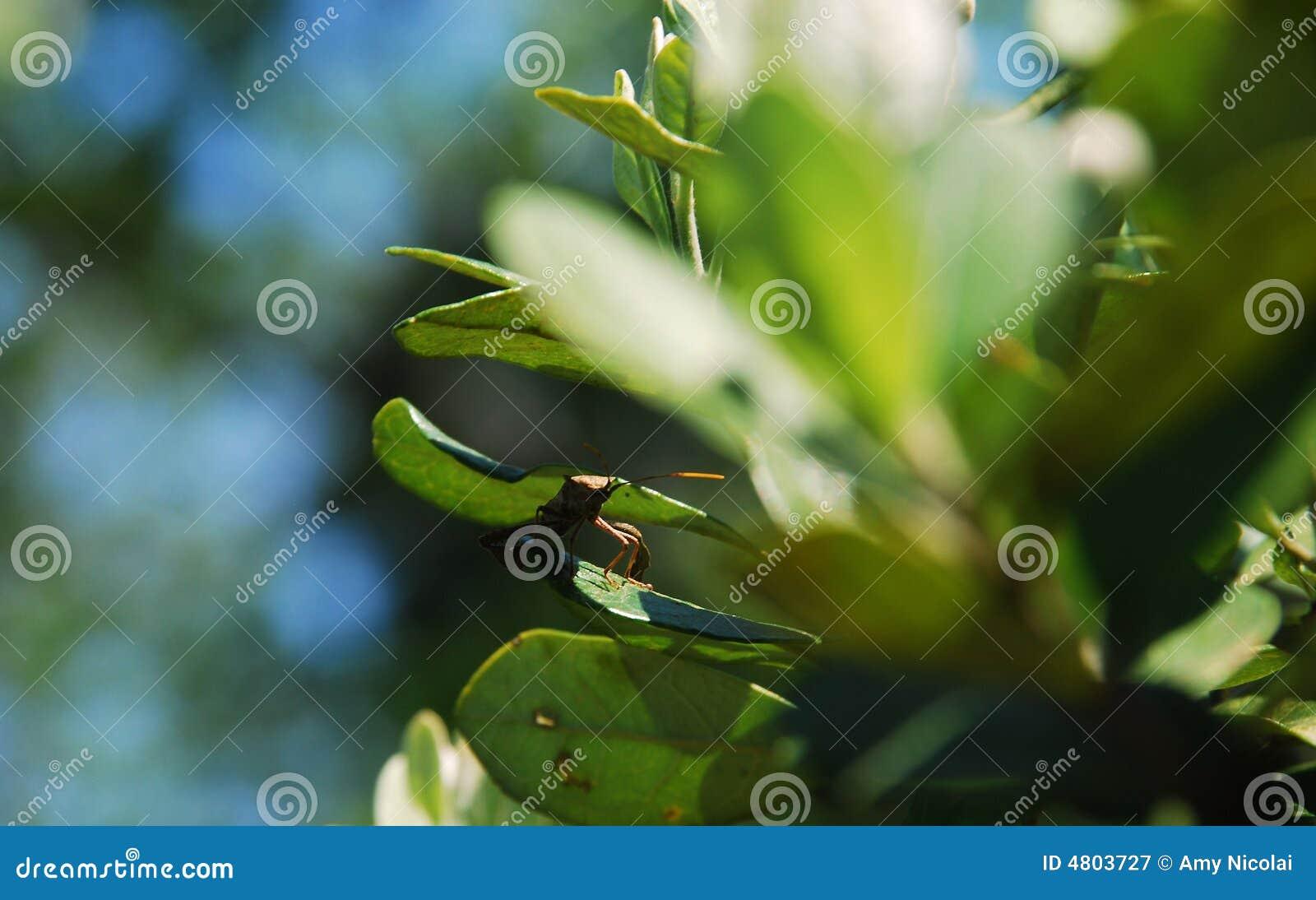Inseto entre as folhas