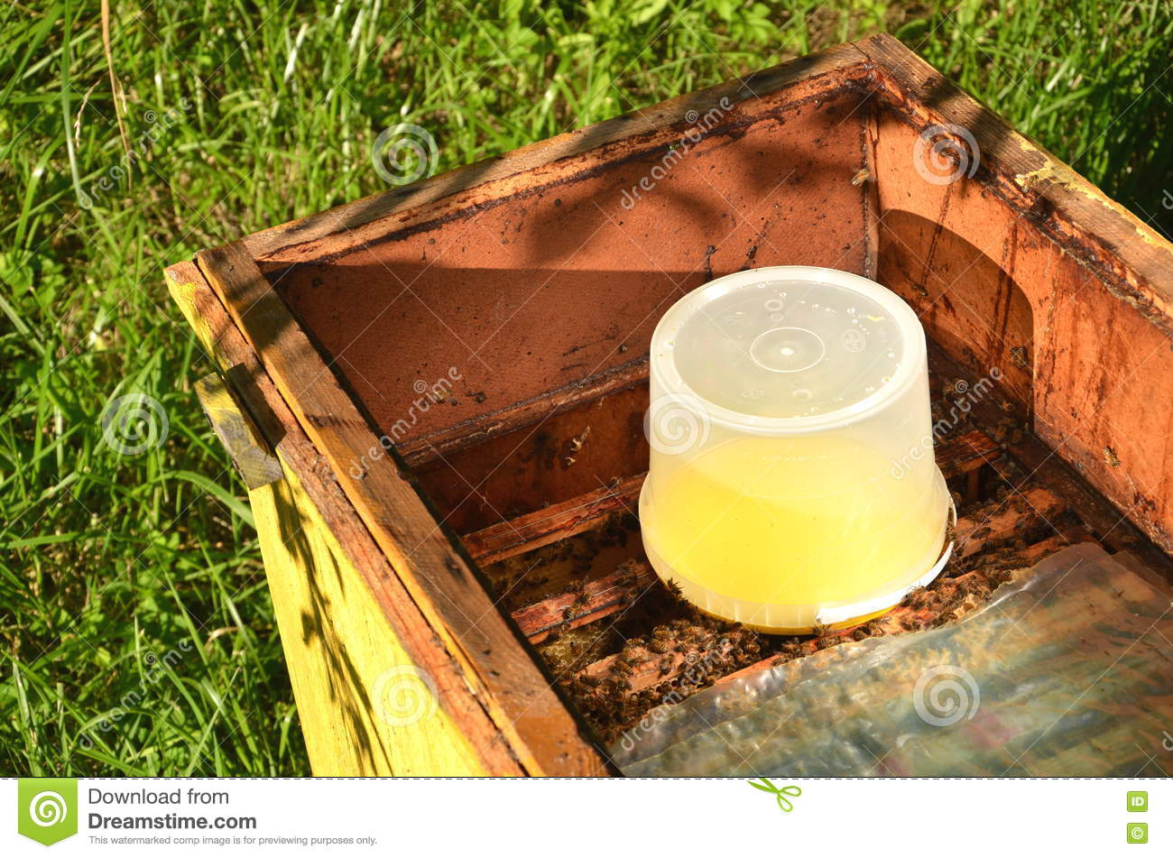 Inside of beehive container with sweet syrup for feeding for Hive container homes