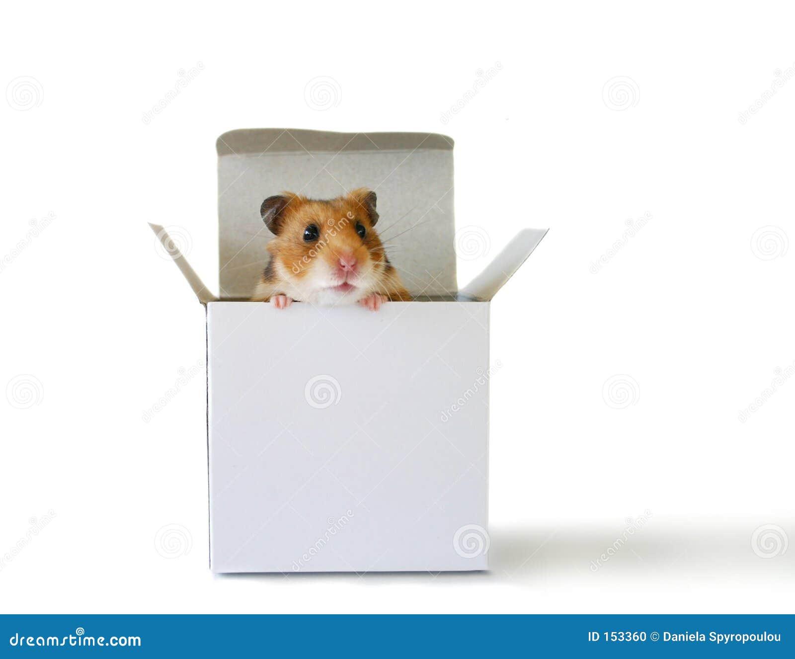 Inside the box (3)