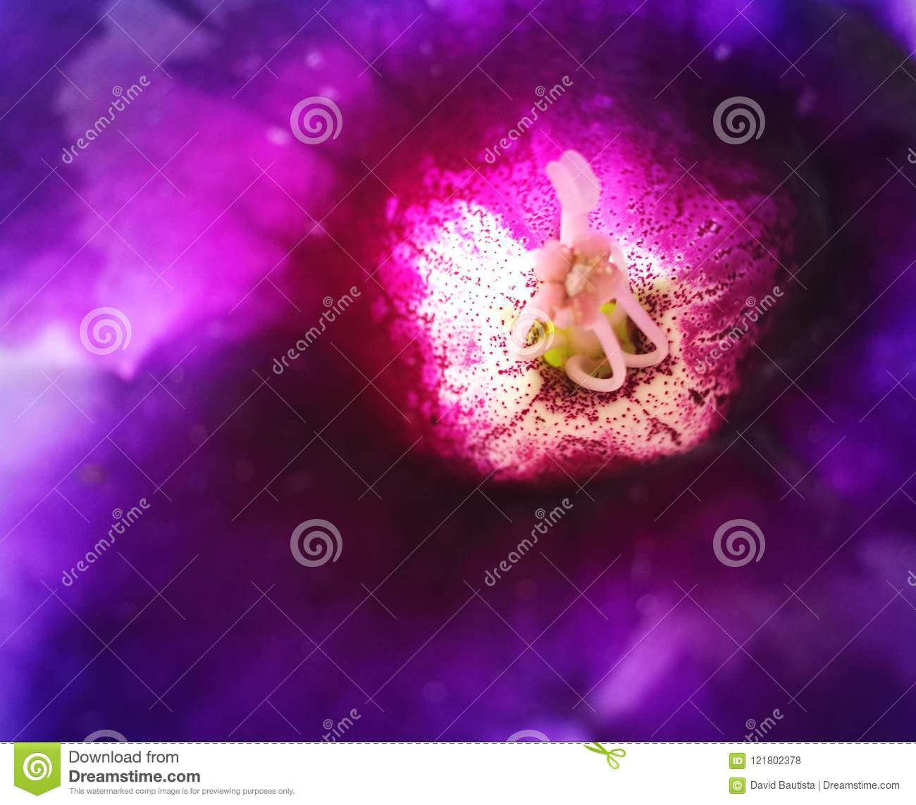 Inside View Of A Purple Flower With White Center And Spots Stock