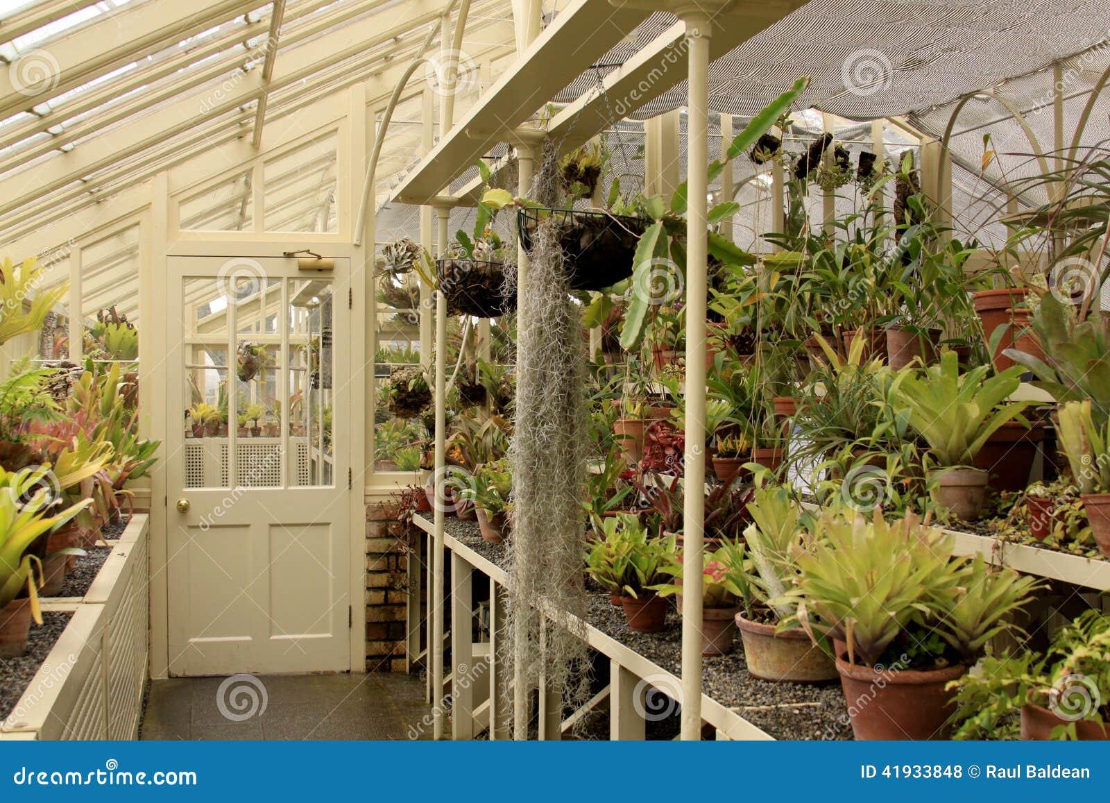 Inside a greenhouse in Ireland