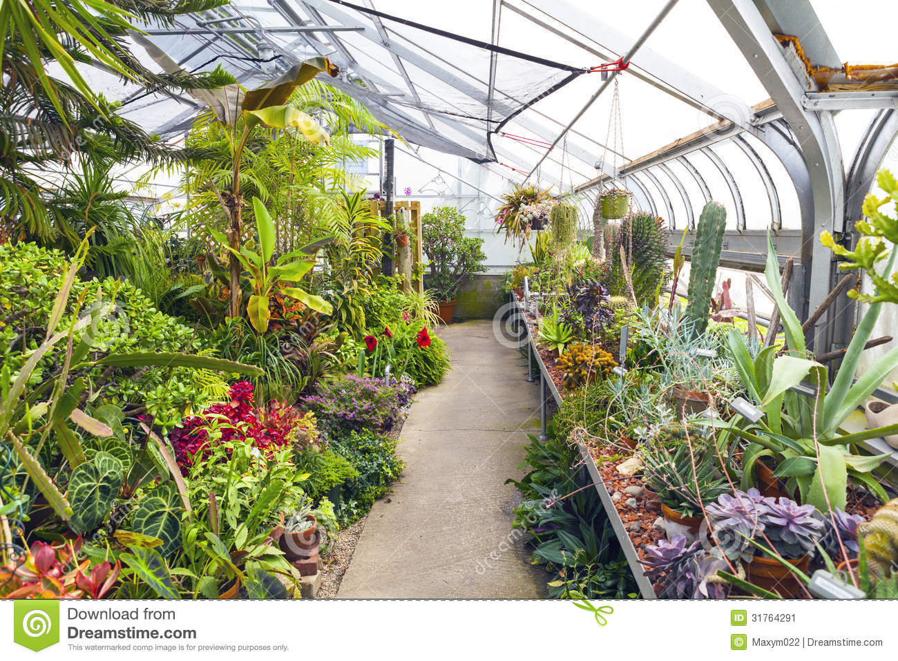 Enjoyable Inside Greenhouse Stock Image Image Of Outdoor Interior Home Interior And Landscaping Oversignezvosmurscom
