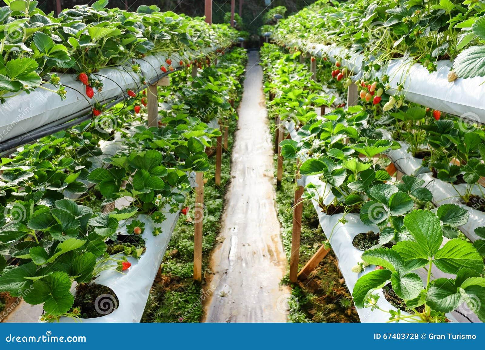 Comprehensive Business Plan for Vegetable Farming