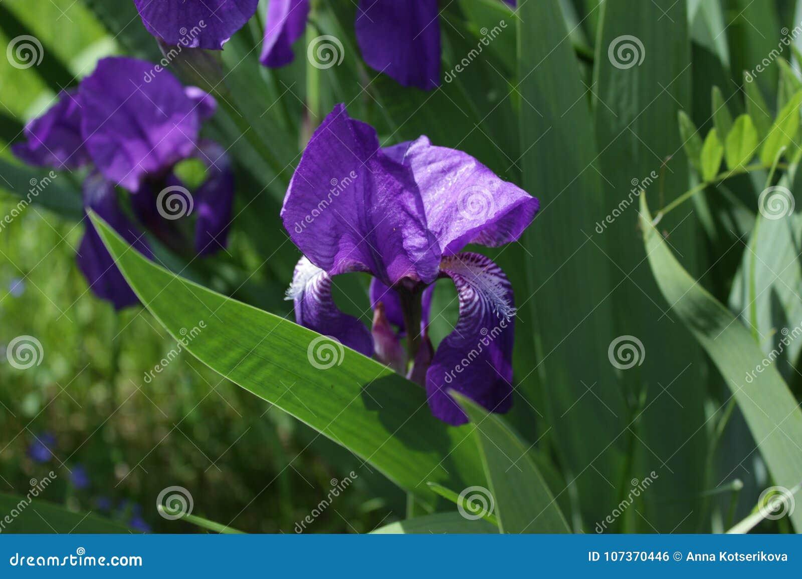Inside The Iris Flowerworld Stock Photo Image Of Gift Card 107370446