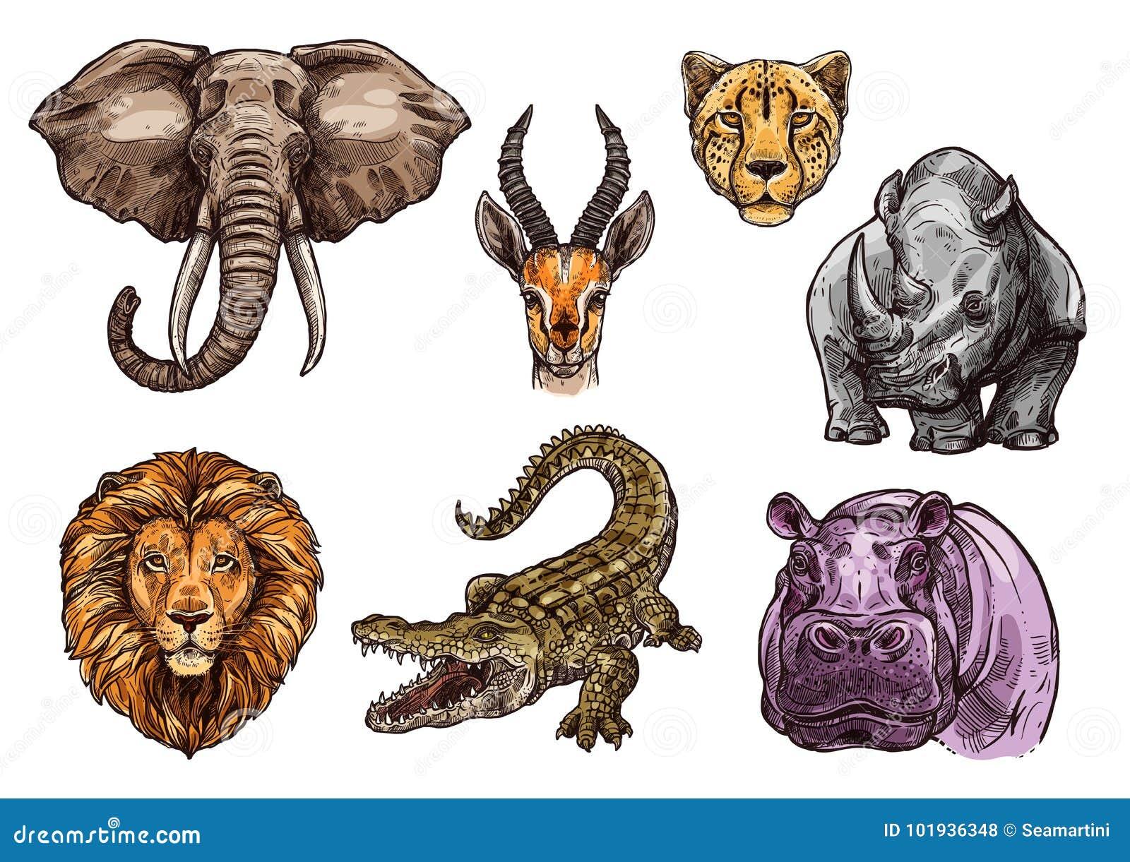 Insieme animale africano di schizzo dell elefante, leone, ippopotamo