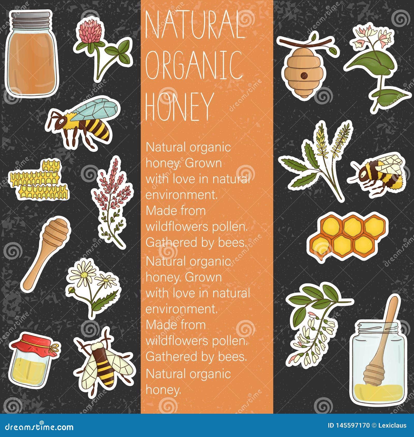 Insieme colorato di vettore degli elementi del miele