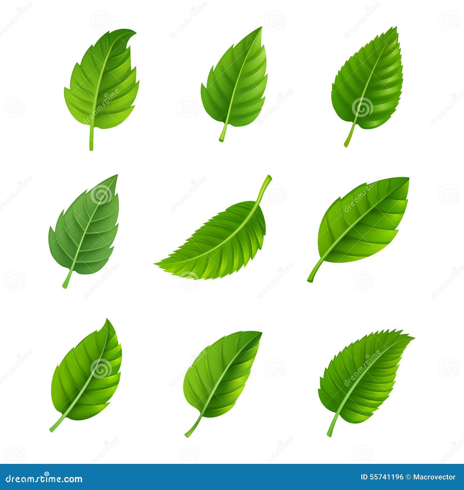 Insieme decorativo delle foglie verdi