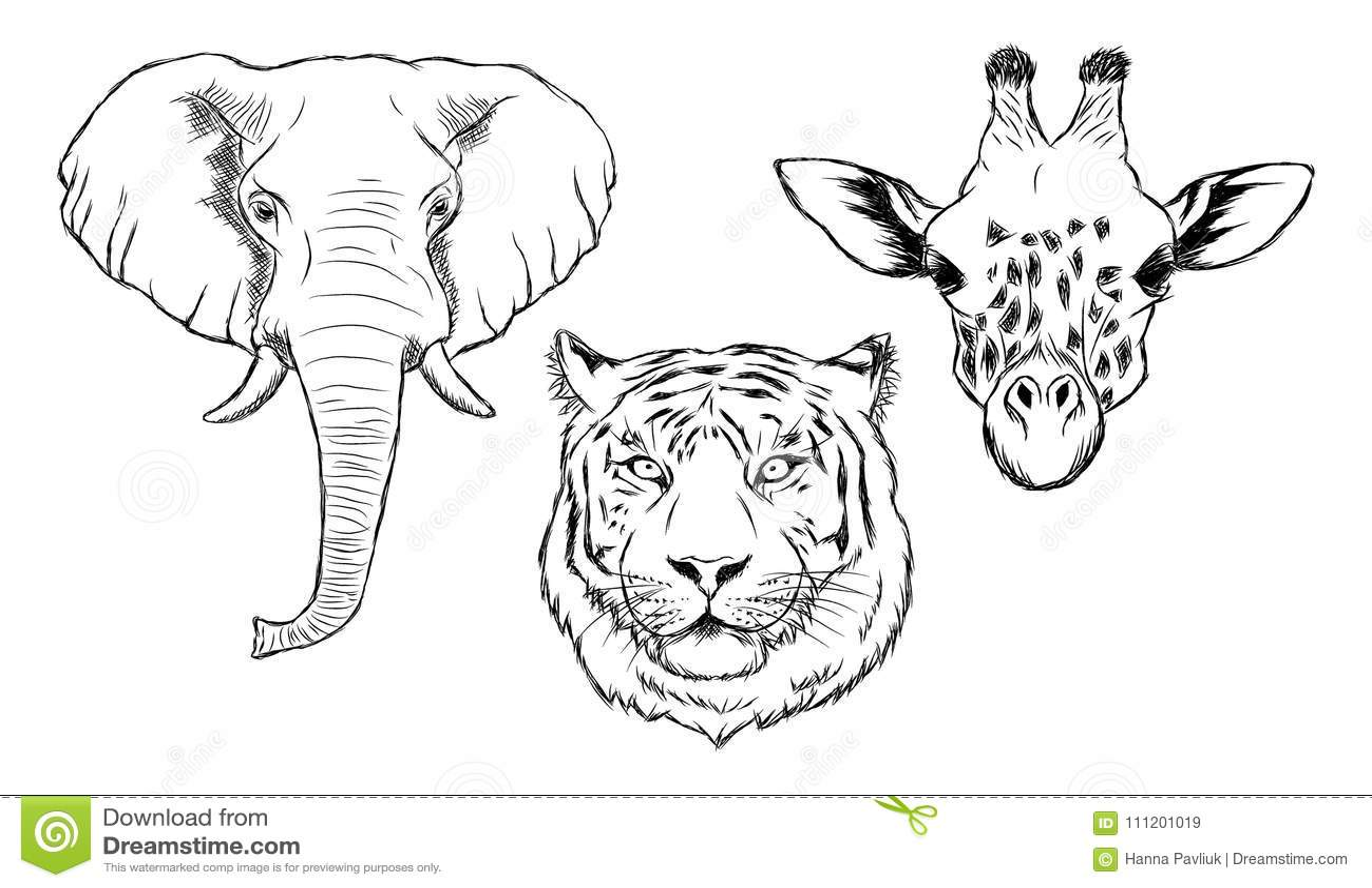 Insieme Degli Animali Selvatici Disegnati A Mano In Bianco E Nero
