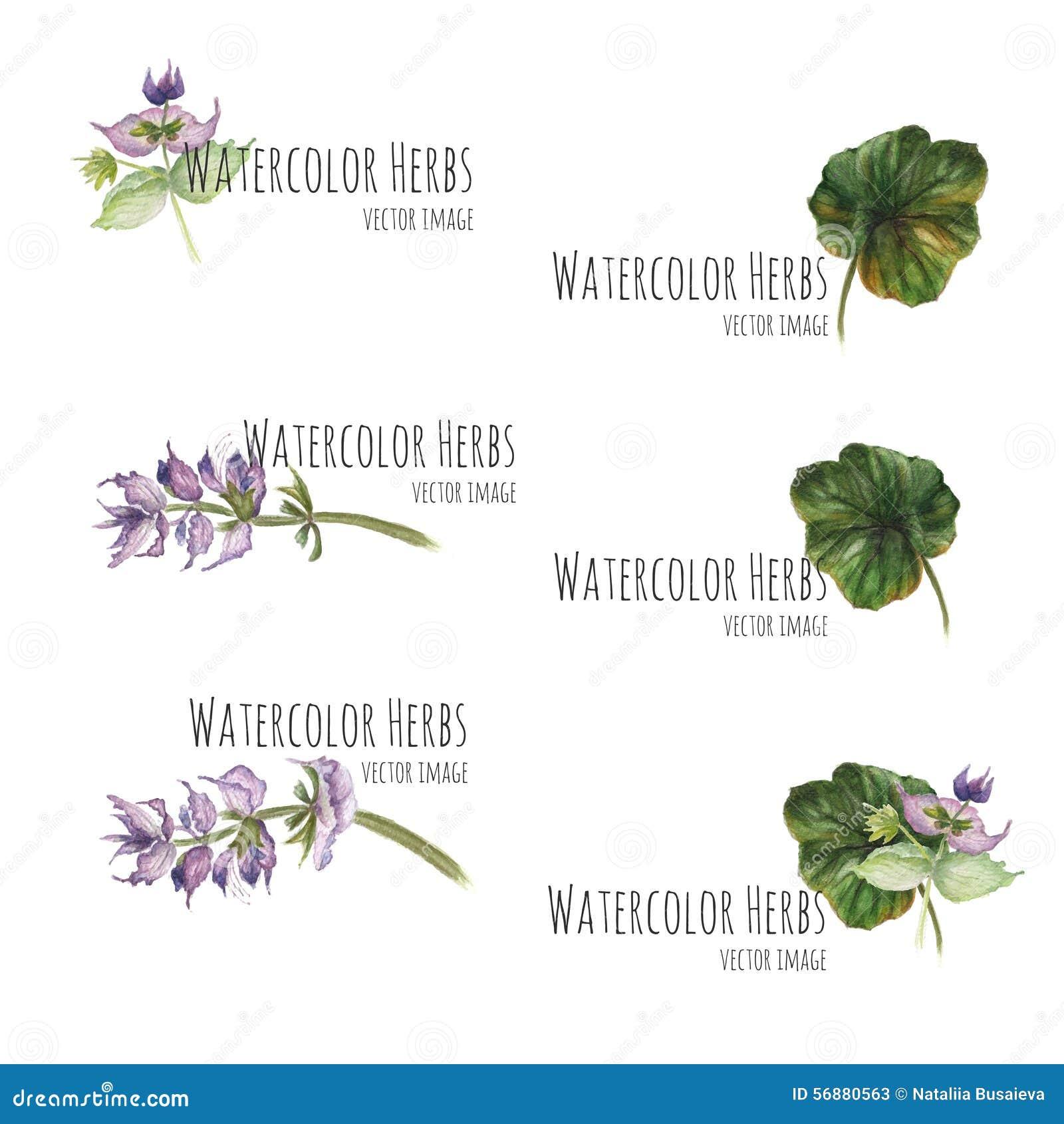 Insieme degli elementi floreali per le insegne e la pubblicità
