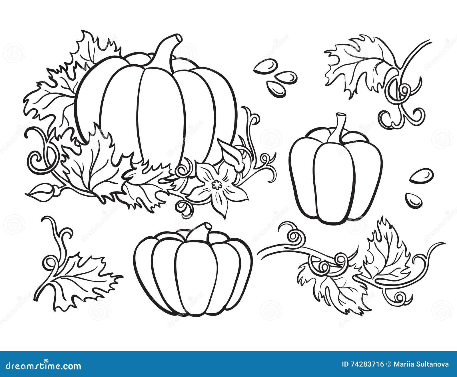 Insieme del disegno della zucca Verdura isolata del profilo, pianta,
