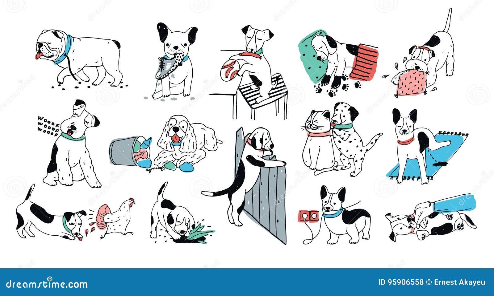 Insieme del problema con la cattiva raccolta di comportamento del cane Le cortecce sciocche del cucciolo, colate, va alla toilett