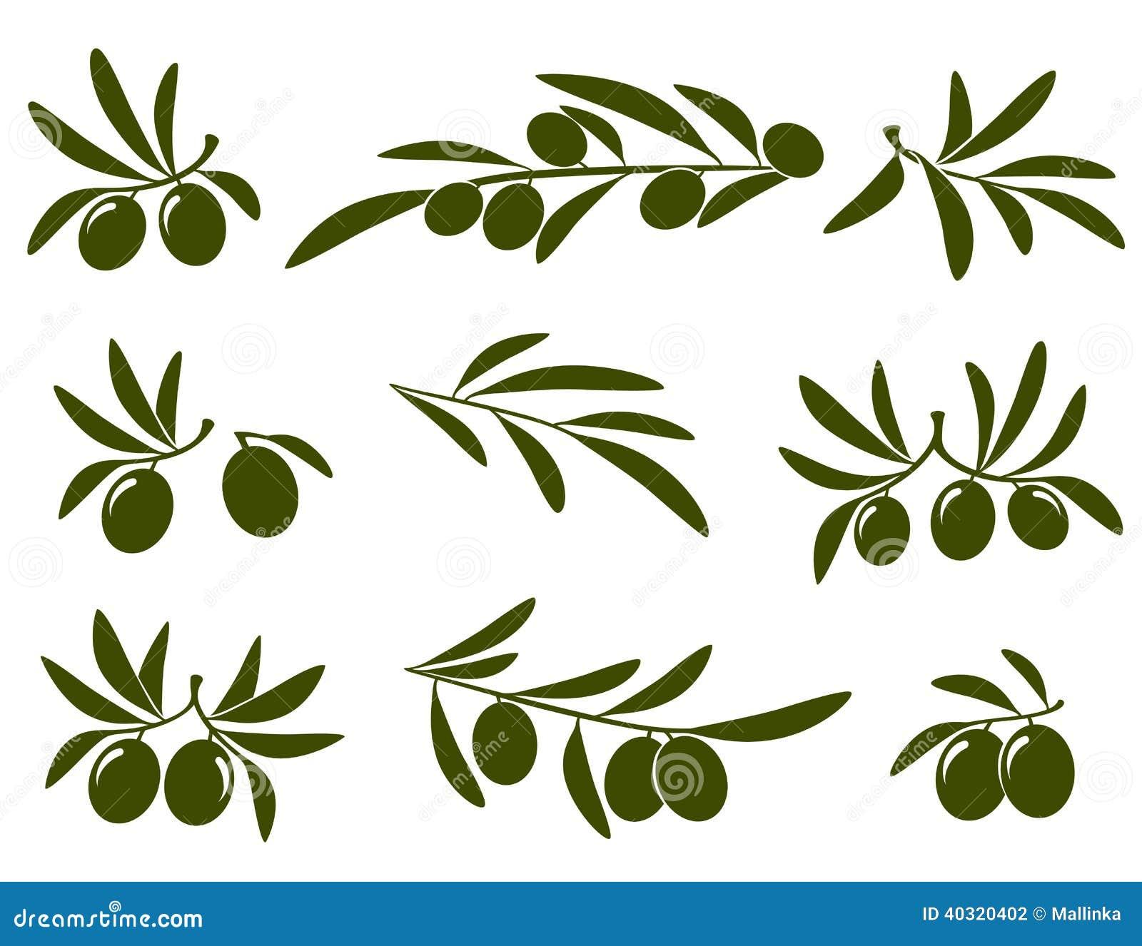 Insieme del ramo di ulivo illustrazione vettoriale for Albero ulivo vettoriale