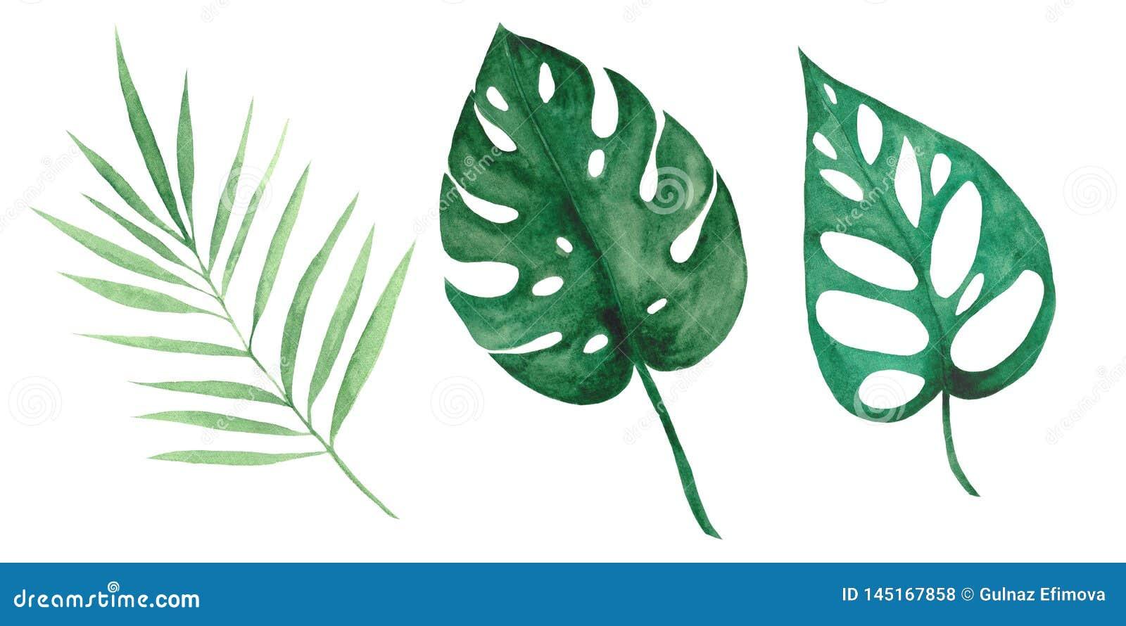 Insieme dell acquerello con le foglie ed i fiori tropicali