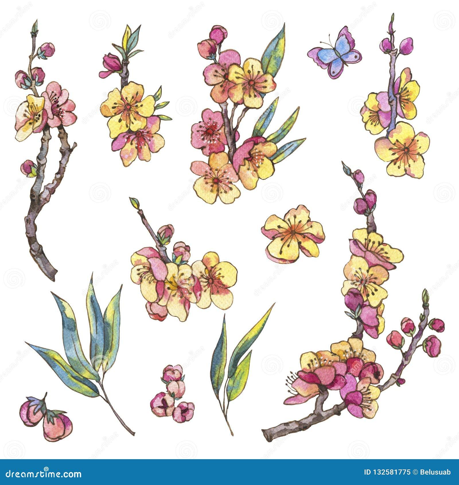 Insieme dell acquerello degli elementi naturali della molla, fiori d annata, bloo