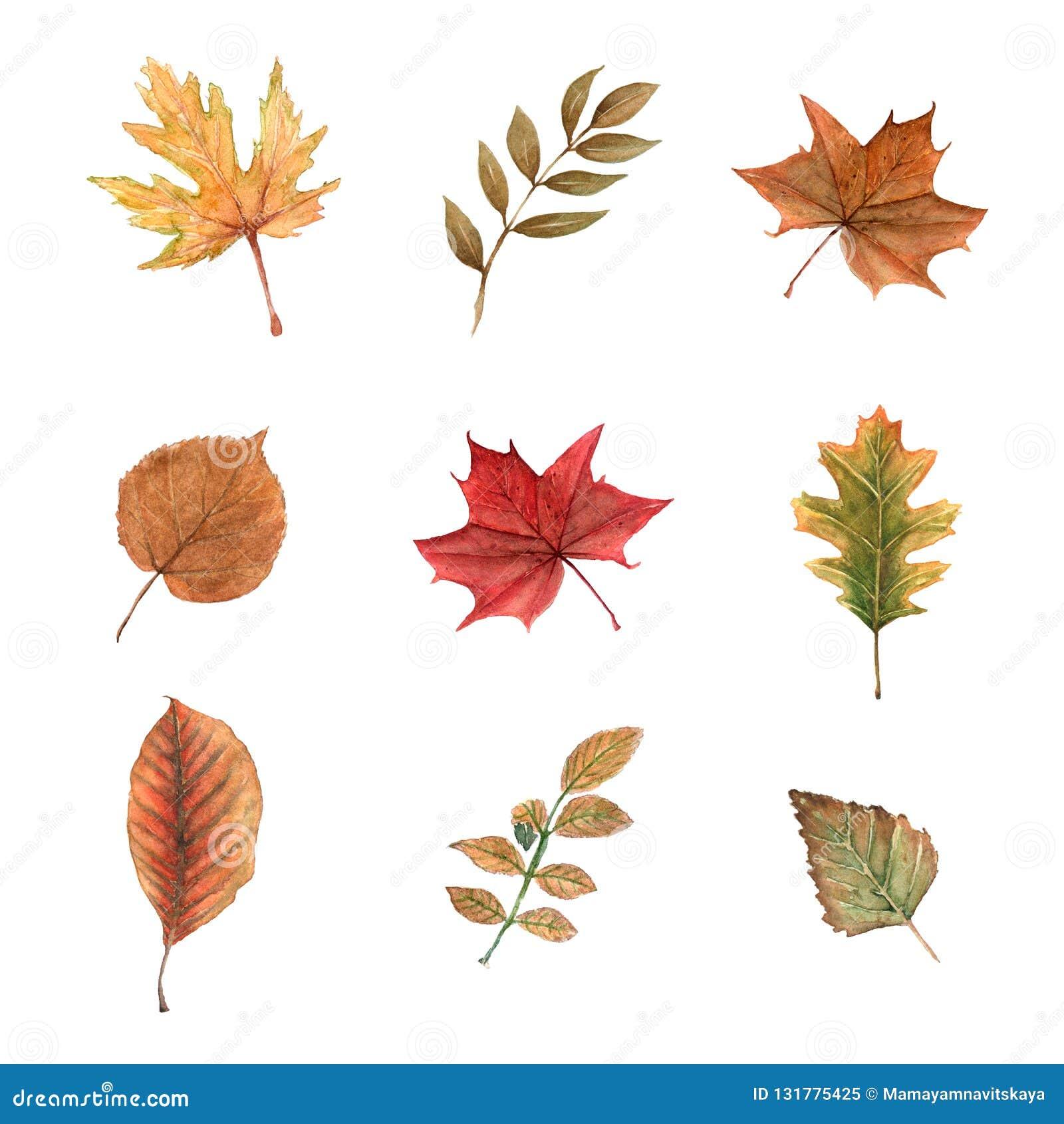 Insieme dell acquerello delle foglie di autunno su un fondo bianco