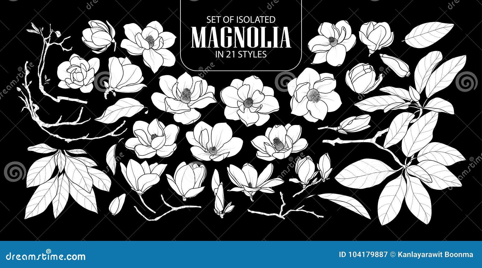 Insieme della magnolia bianca isolata della siluetta in 21 stile Illustrazione disegnata a mano sveglia di vettore del fiore nell