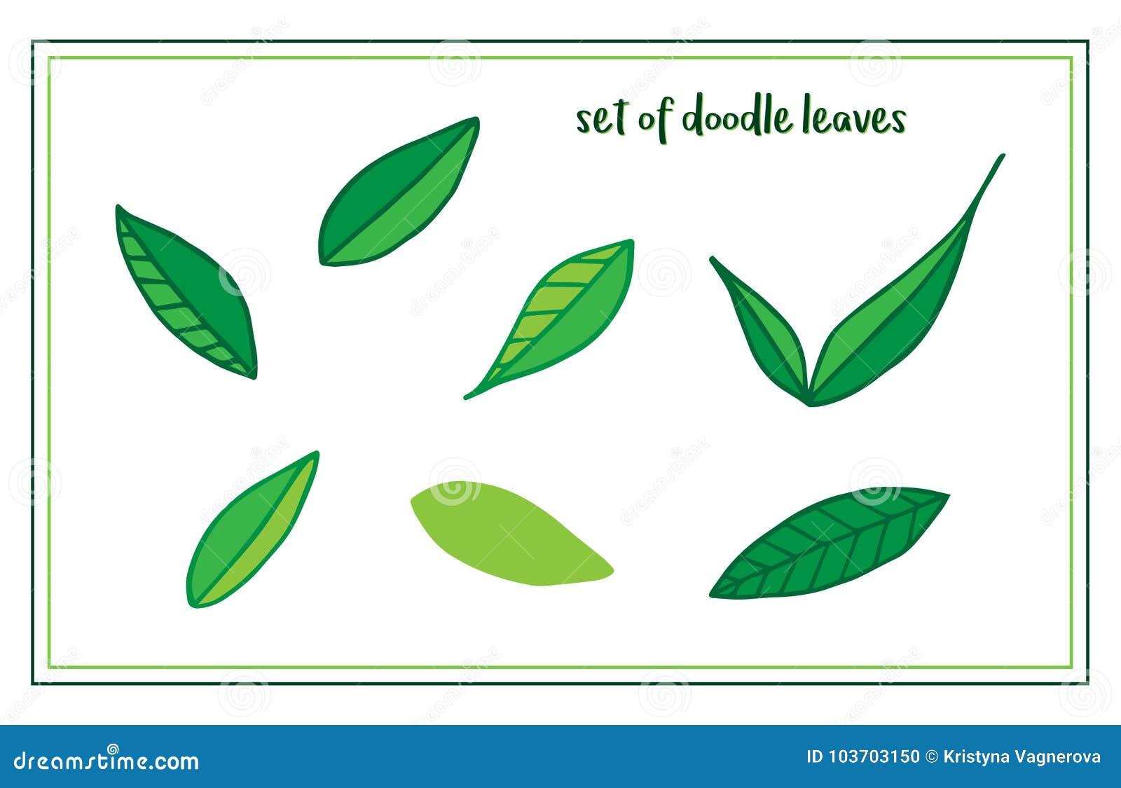 Insieme delle foglie disegnate a mano