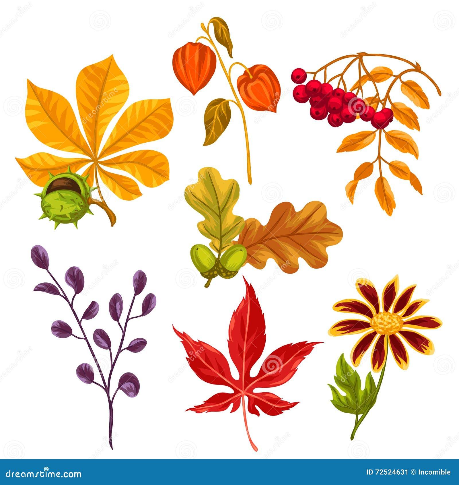 Insieme delle foglie e delle piante di autunno stilizzate for Programmi per progettare oggetti