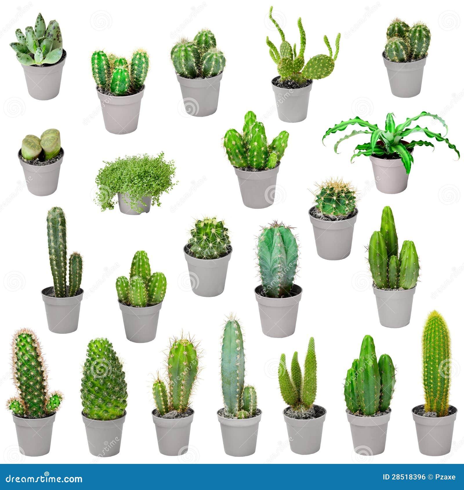 Insieme Delle Piante D Appartamento In Vasi Cactus