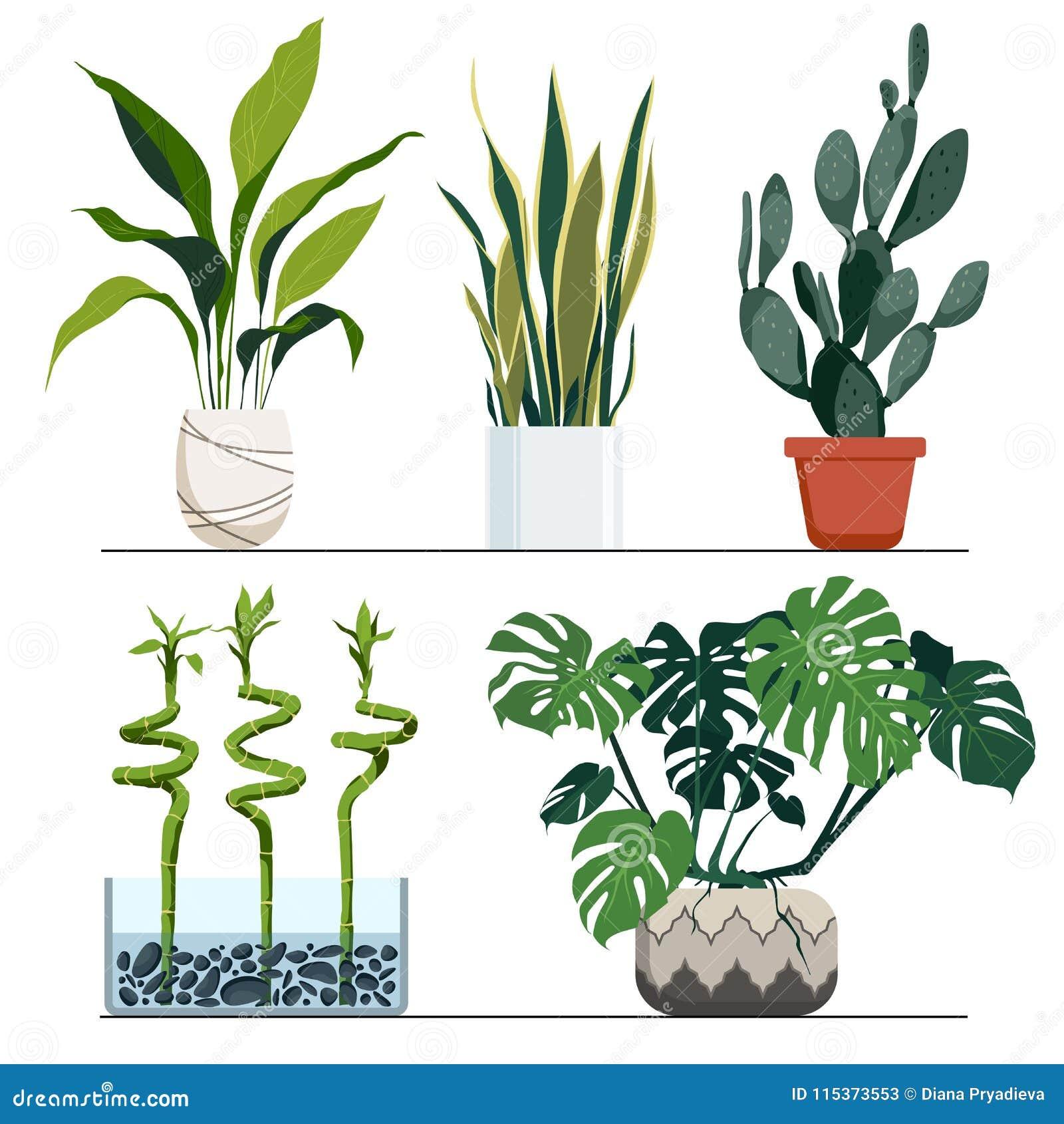 Piante Eleganti Da Appartamento insieme delle piante d'appartamento in vasi illustrazione