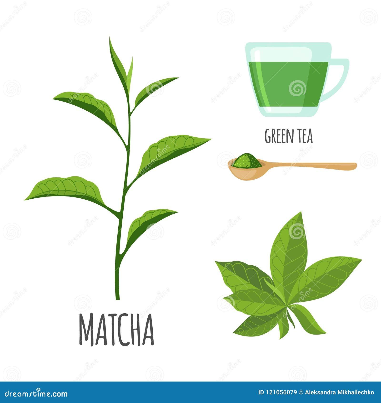 Insieme di Matcha con la tazza di tè nello stile piano isolato su bianco