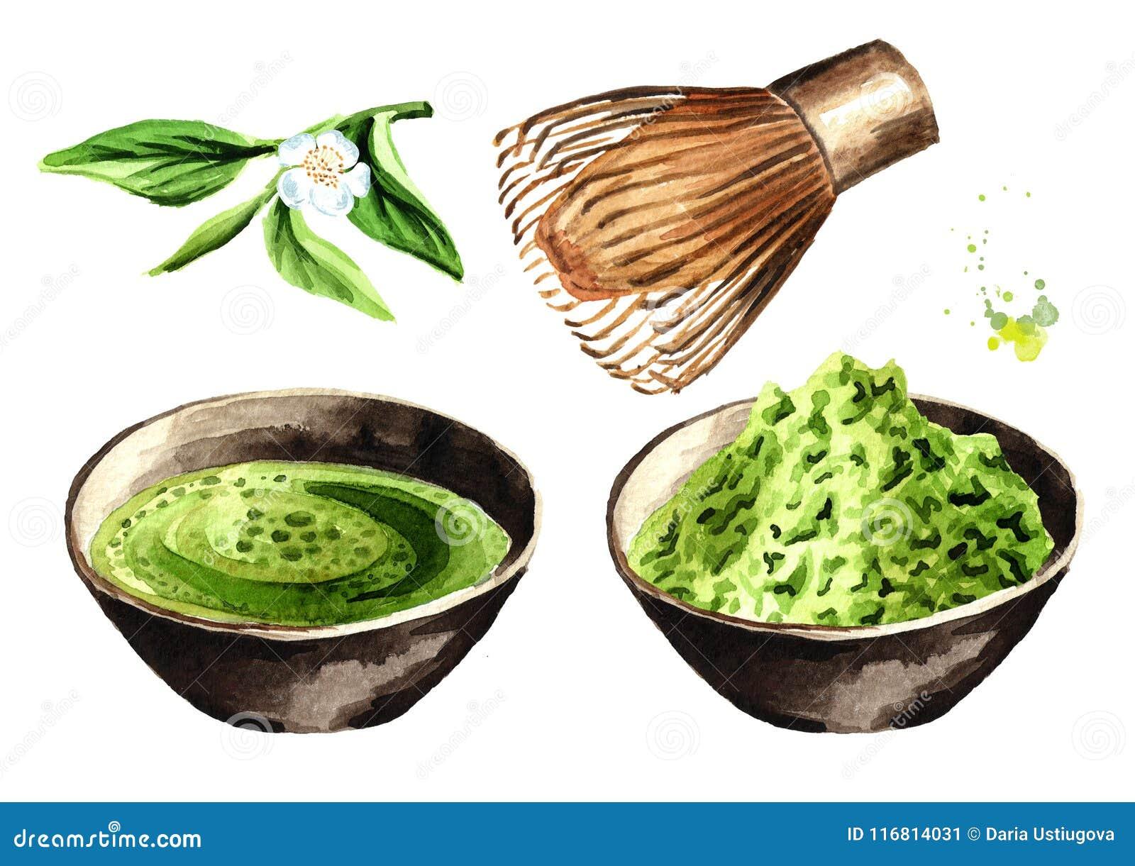 Insieme di tè verde organico di Matcha Illustrazione disegnata a mano dell acquerello, isolata su fondo bianco