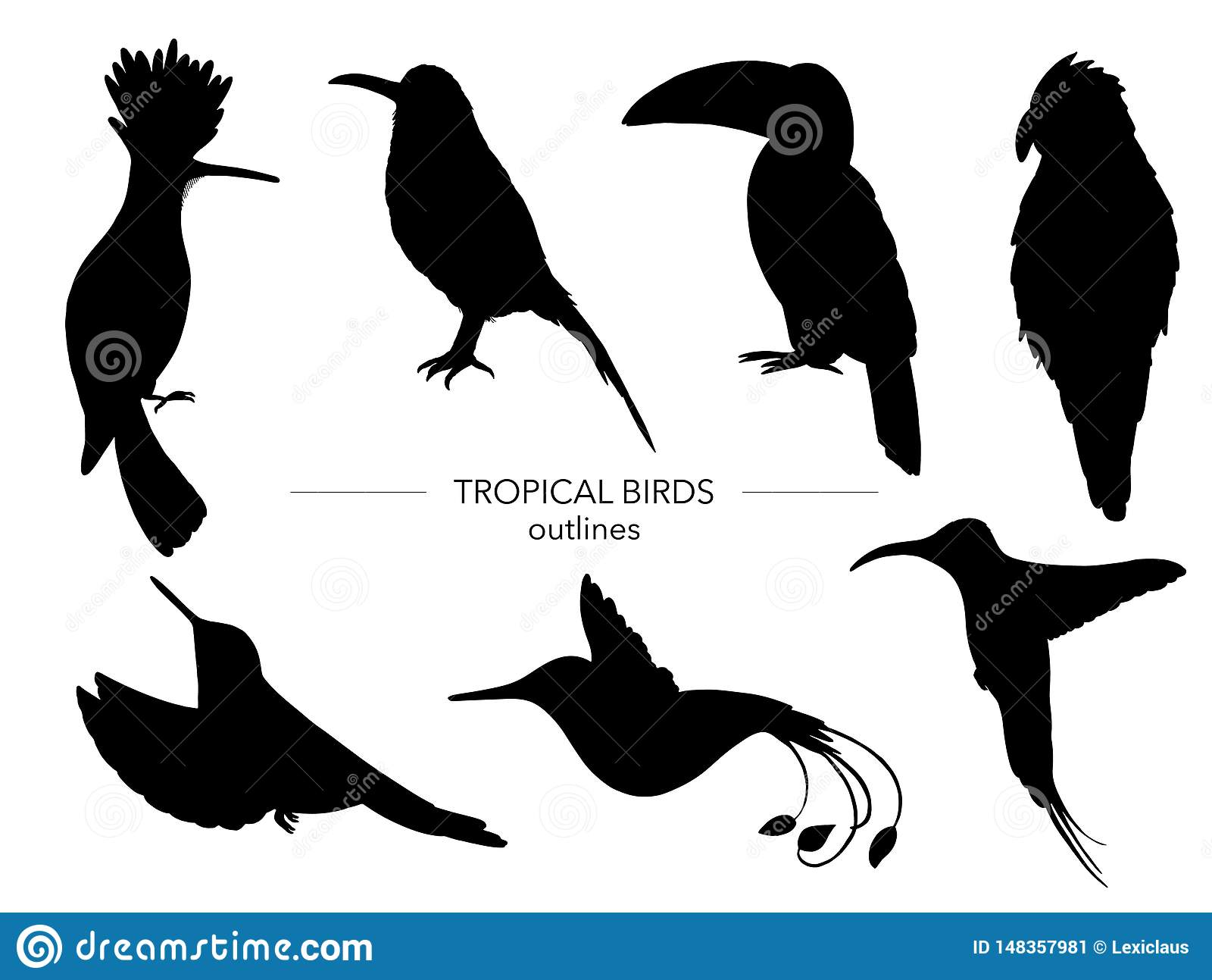 Insieme di vettore degli uccelli tropicali