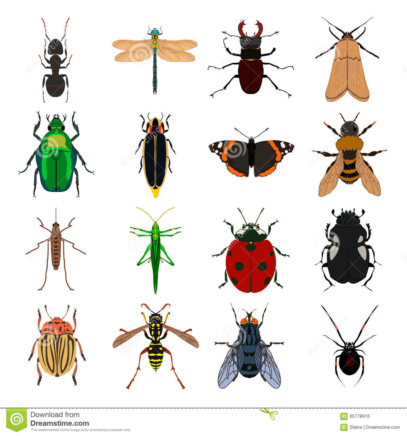 Insects.org