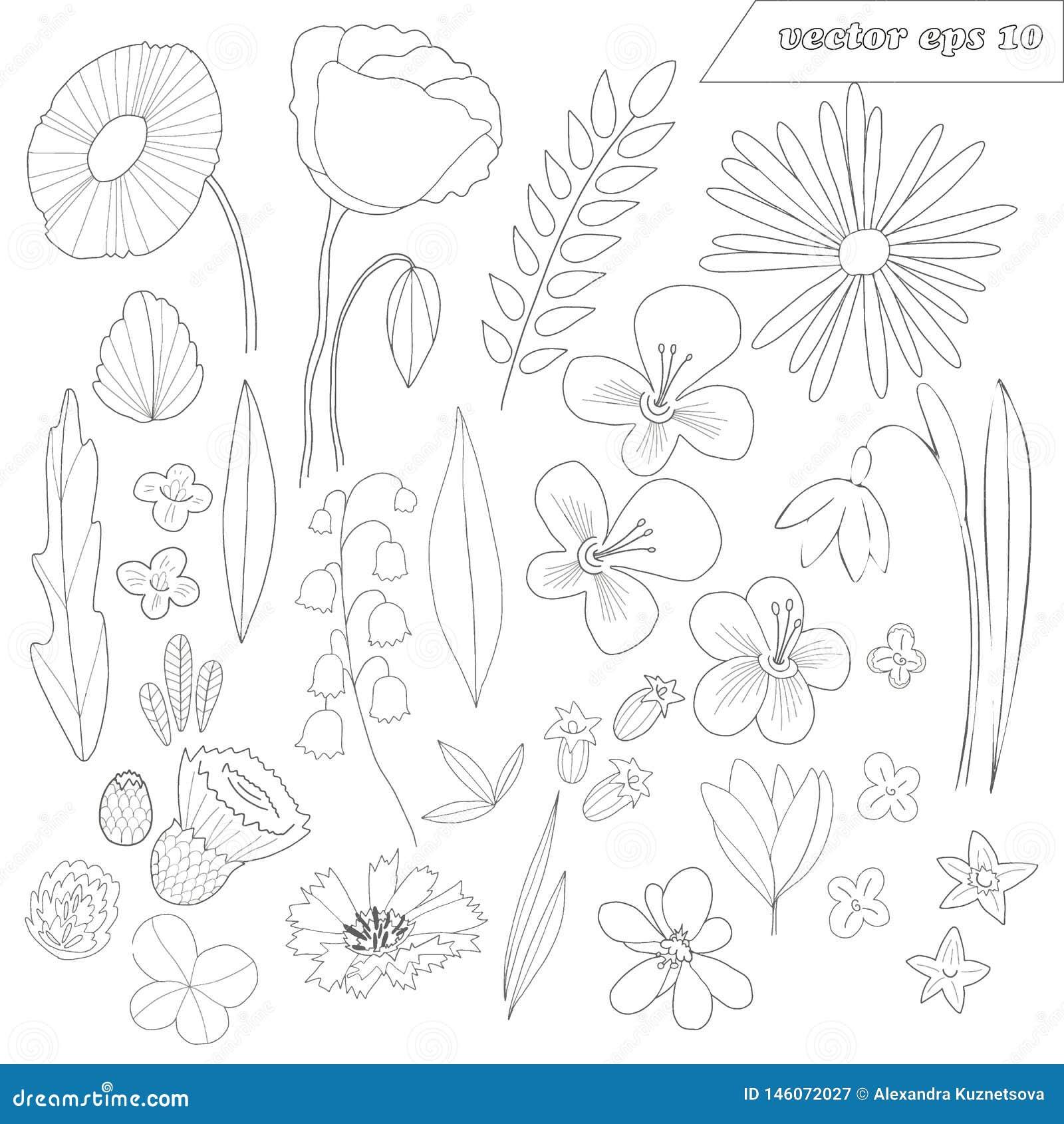 Insieme disegnato a mano dei fiori descritti selvaggi