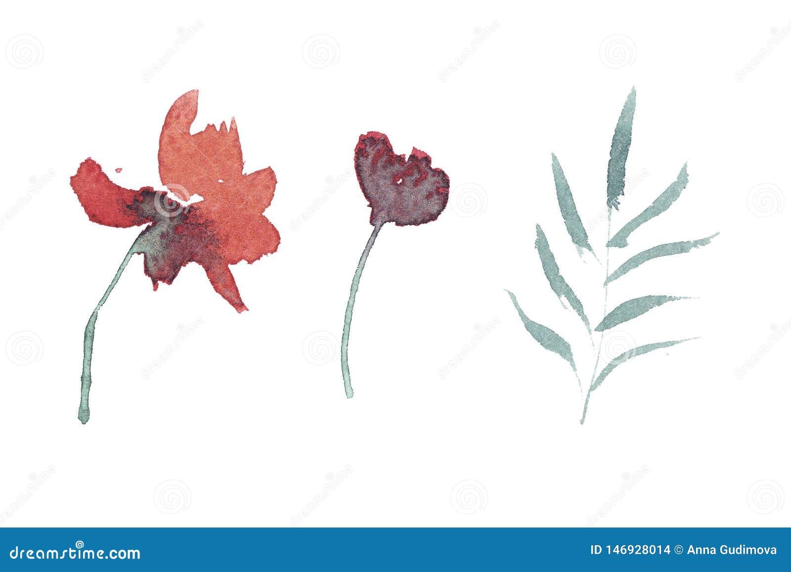 Insieme disegnato a mano dell acquerello dei fiori e delle foglie