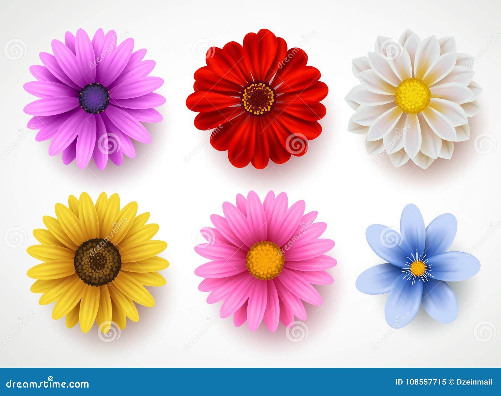 Insieme variopinto di vettore dei fiori della primavera isolato nel fondo bianco